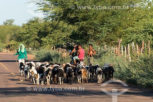 Mulher pastoreando cabras (Capra aegagrus hircus) na Aldeia Caatinga Grande - Tribo Truká  - Cabrobó - Pernambuco (PE) - Brasil
