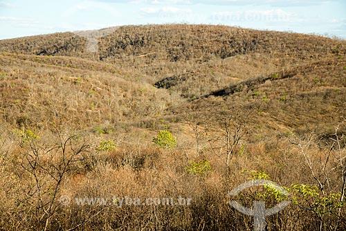 Vegetação de caatinga durante o período de seca  - Jati - Ceará (CE) - Brasil