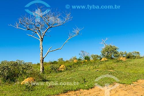 Pasto e árvore seca em propriedade rural  - Guarani - Minas Gerais (MG) - Brasil