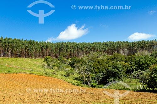 Solo arado para plantio de fumo com plantação de eucaliptos ao fundo  - Guarani - Minas Gerais (MG) - Brasil