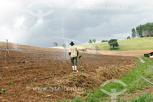 Trabalhador rural plantando mudas de fumo em área irrigada  - Guarani - Minas Gerais (MG) - Brasil