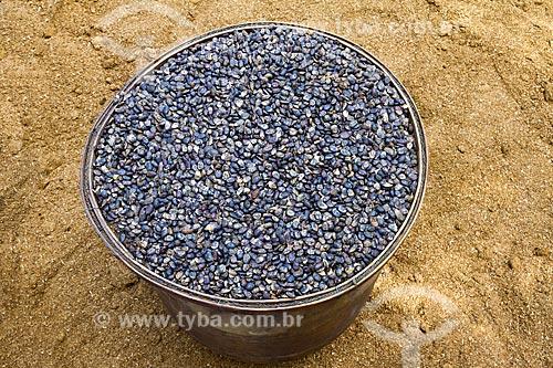Detalhe de balde com sementes de umburana (Amburana cearensis) na zona rural da cidade de Guarani  - Guarani - Minas Gerais (MG) - Brasil