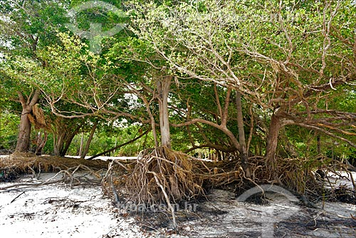 Floresta inundável na margem do Rio Arapiuns  - Santarém - Pará (PA) - Brasil