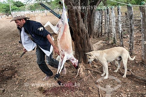 Homem abatendo cabra na zona rural da cidade de Serrita  - Serrita - Pernambuco (PE) - Brasil