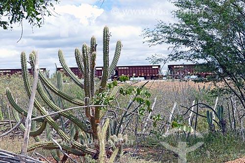 Vista de trem da Ferrovia Nova Transnordestina na zona rural da cidade de Salgueiro  - Salgueiro - Pernambuco (PE) - Brasil