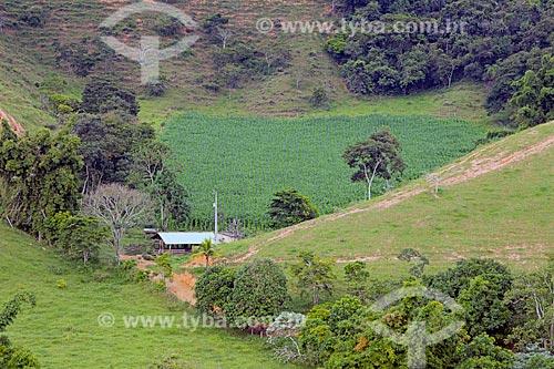 Plantação de milho em fazenda na zona rural da cidade de Guarani  - Guarani - Minas Gerais (MG) - Brasil