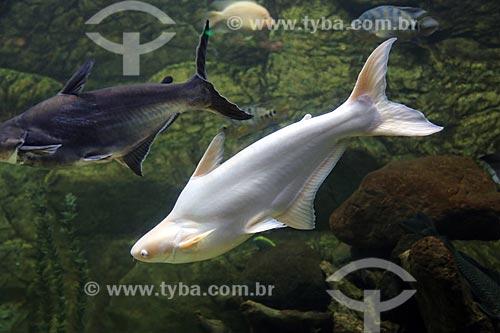 Peixes no Acuario de Veracruz (Aquário de Veracruz)  - Veracruz - Veracruz - México