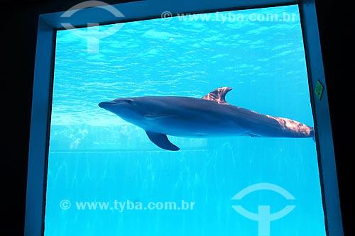 Golfinho-nariz-de-garrafa (Tursiops truncatus) no Acuario de Veracruz (Aquário de Veracruz)  - Veracruz - Veracruz - México