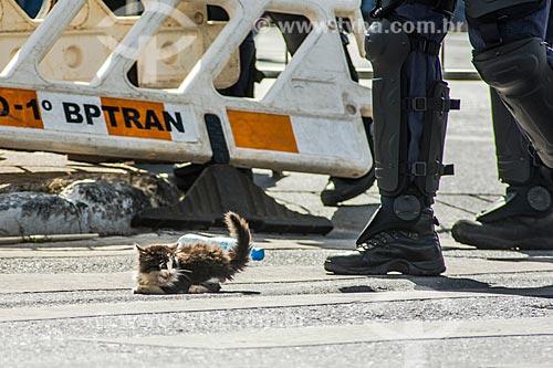 Filhote de gato arremessado durante a manifestação contra o governo de Michel Temer na Esplanada dos Ministérios  - Brasília - Distrito Federal (DF) - Brasil