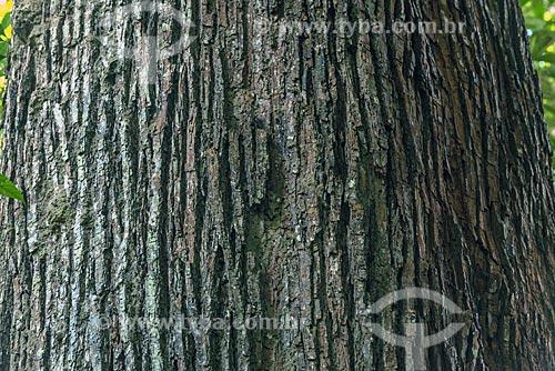 Detalhe de tronco de castanheira (castanea sativa) na Reserva de Desenvolvimento Sustentável do Iratapuru  - Laranjal do Jari - Amapá (AP) - Brasil