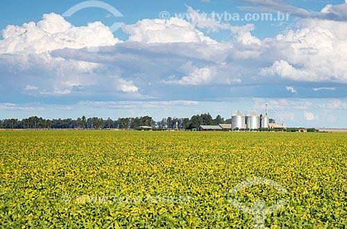 Vista geral de plantação de soja  - Formosa do Rio Preto - Bahia (BA) - Brasil