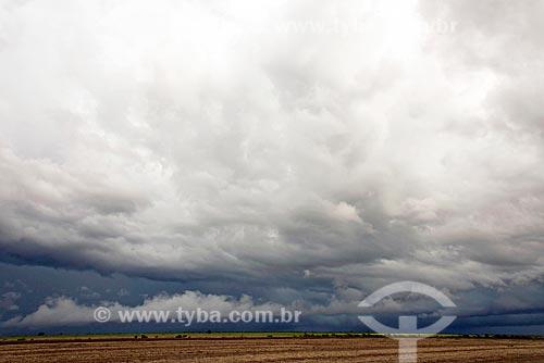 Nuvem de chuva em área de cerrado  - Pedro Afonso - Tocantins (TO) - Brasil