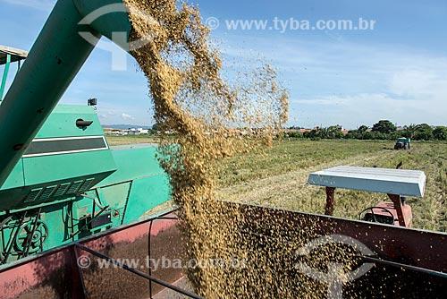 Descarga de arroz durante a colheita mecanizada  - Caçapava - São Paulo (SP) - Brasil
