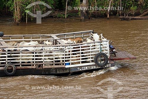 Detalhe de balsa transportando gado no Rio Amazonas entre as cidade de Manaus e Itacoatiara  - Manaus - Amazonas (AM) - Brasil