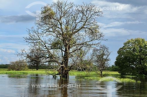 Igarapé no Rio Amazonas próximo à Parintins  - Parintins - Amazonas (AM) - Brasil