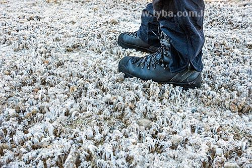 Vegetação congelada no Morro do Couto no Parque Nacional de Itatiaia  - Itatiaia - Rio de Janeiro (RJ) - Brasil
