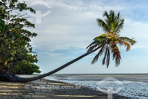 Vista de coqueiro na orla da Praia de Moreré  - Cairu - Bahia (BA) - Brasil