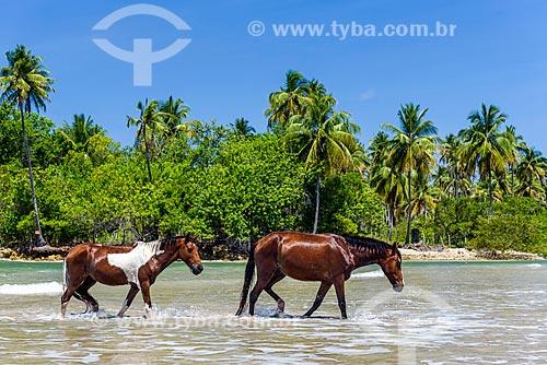 Cavalos tomando banho de mar na Praia da Cueira  - Cairu - Bahia (BA) - Brasil