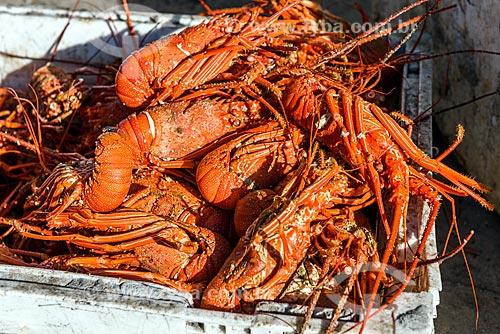 Detalhe de lagosta na orla da Praia da Cueira  - Cairu - Bahia (BA) - Brasil