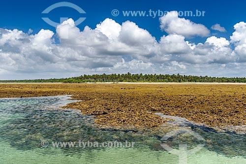 Piscina natural na Ponta dos Castelhanos  - Cairu - Bahia (BA) - Brasil