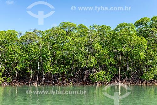 Vista de mangue na foz do Rio Catu na Ponta dos Castelhanos  - Cairu - Bahia (BA) - Brasil