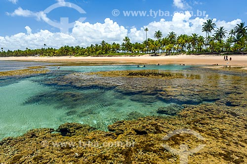 Piscina natural na Praia de taipús de fora  - Maraú - Bahia (BA) - Brasil