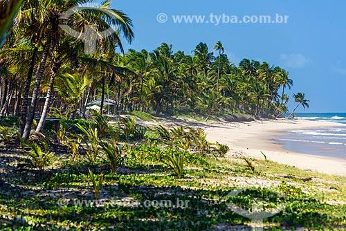 Vista da orla da Praia de taipús de fora  - Maraú - Bahia (BA) - Brasil