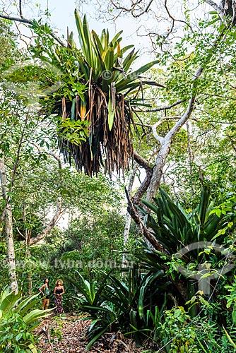 Vista de bromélia na Trilha das Bromélias Gigantes  - Maraú - Bahia (BA) - Brasil