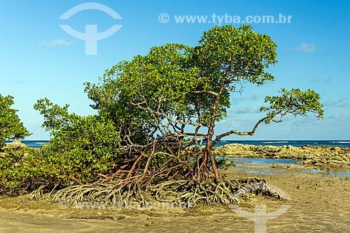 Mangue da orla da 3ª Praia  - Cairu - Bahia (BA) - Brasil