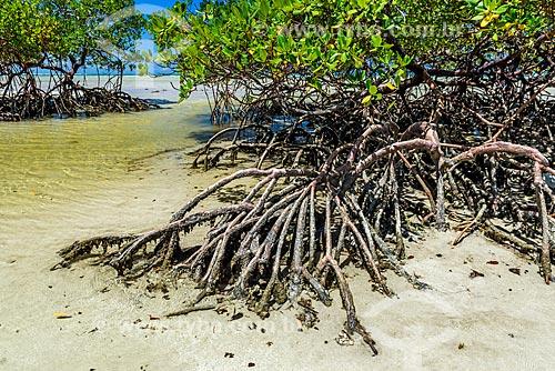 Mangue na orla da Praia do Encanto  - Cairu - Bahia (BA) - Brasil