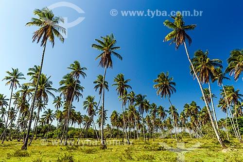 Coqueiros na orla da Praia de Garapuá  - Cairu - Bahia (BA) - Brasil