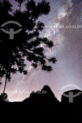 Silhueta de araucária (Araucaria angustifolia) e dos Três Picos de Salinas no Parque Estadual dos Três Picos  - Teresópolis - Rio de Janeiro (RJ) - Brasil