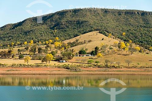 Ipês-Amarelo às margens da Represa de Furnas  - Capitólio - Minas Gerais (MG) - Brasil