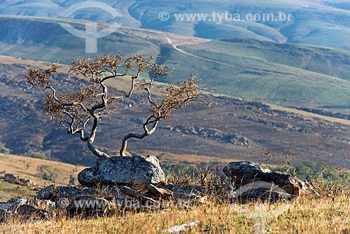 Campos de altitude no Parque Nacional da Serra da Canastra  - São Roque de Minas - Minas Gerais (MG) - Brasil