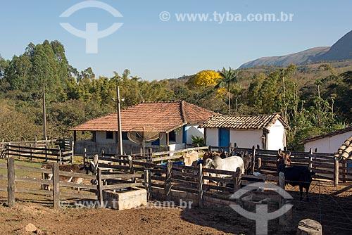 Gados em fazenda na zona rural da cidade de São Roque de Minas  - São Roque de Minas - Minas Gerais (MG) - Brasil