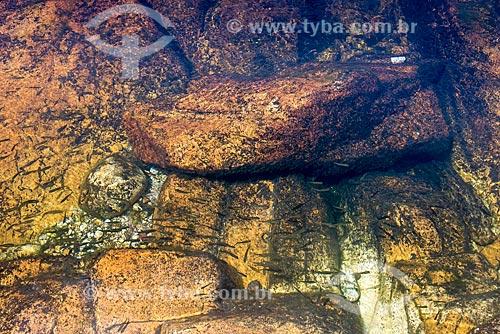 Detalhe de alevinos no Rio Samburá - Parque Nacional da Serra da Canastra  - São Roque de Minas - Minas Gerais (MG) - Brasil