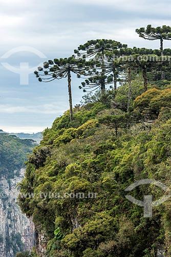 Vista do Cânion do Itaimbezinho durante a trilha do vértice no Parque Nacional dos Aparados da Serra  - Cambará do Sul - Rio Grande do Sul (RS) - Brasil
