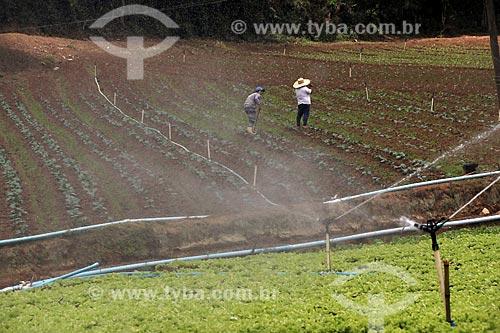 Plantação de hortaliças e verduras na zona rural da cidade de Nova Friburgo  - Nova Friburgo - Rio de Janeiro (RJ) - Brasil
