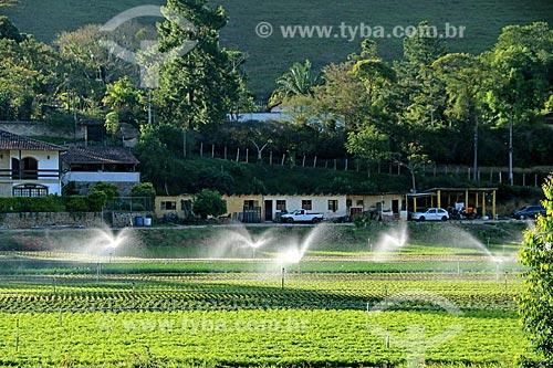 Plantação de hortaliças e verduras na zona rural da cidade de Teresópolis  - Teresópolis - Rio de Janeiro (RJ) - Brasil