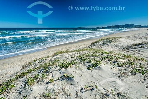 Vista da orla da Praia da Guarda do Embaú no Parque Estadual da Serra do Tabuleiro  - Palhoça - Santa Catarina (SC) - Brasil