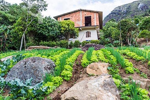 Plantio consorciado de alface e cebolinha na zona rural da cidade de Petrópolis  - Petrópolis - Rio de Janeiro (RJ) - Brasil