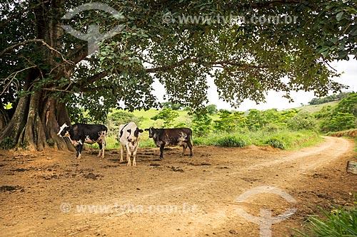 Gado leiteiro às margens de estrada de terra na zona rural da cidade de Guarani  - Guarani - Minas Gerais (MG) - Brasil