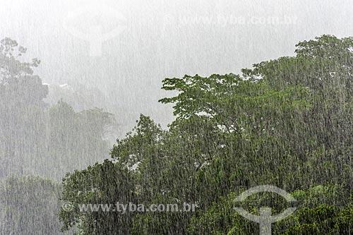 Tempestade em árvores no Rio de Janeiro  - Rio de Janeiro - Rio de Janeiro (RJ) - Brasil