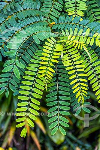 Detalhe de folhas verdes na Área de Proteção Ambiental da Serrinha do Alambari  - Resende - Rio de Janeiro (RJ) - Brasil