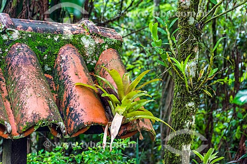 Detalhe de bromélia em telhado na Área de Proteção Ambiental da Serrinha do Alambari  - Resende - Rio de Janeiro (RJ) - Brasil