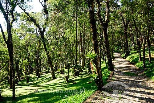 Parque na cidade de Campos do Jordão  - Campos do Jordão - São Paulo (SP) - Brasil