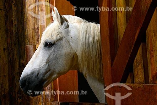 Estábulo com cavalos em fazenda no Vale do Paraíba  - Campos do Jordão - São Paulo (SP) - Brasil