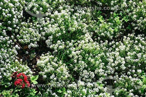 Canteiro de flores na cidade de Campos do Jordão  - Campos do Jordão - São Paulo (SP) - Brasil