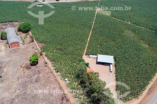 Foto feita com drone de plantação de banana  - Barbalha - Ceará (CE) - Brasil