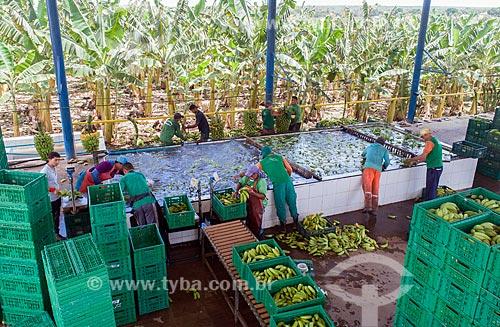 Foto feita com drone do processo de lavagem em plantação de banana  - Barbalha - Ceará (CE) - Brasil